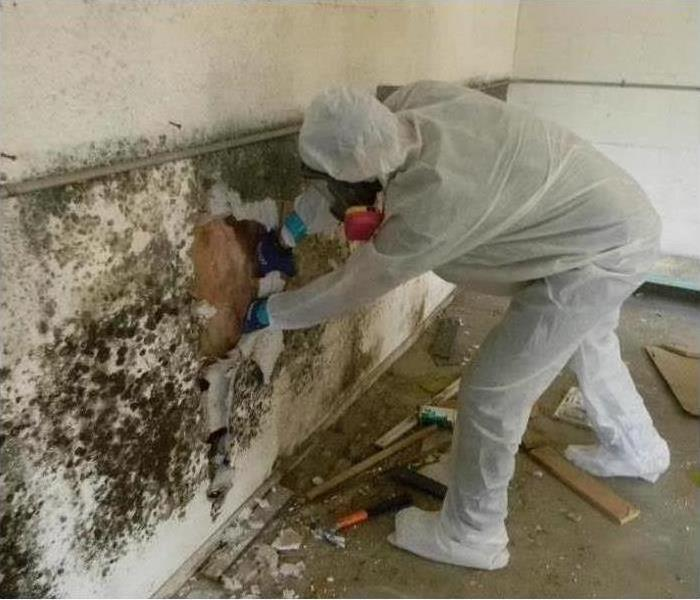 Commercial Mold Remediation in West