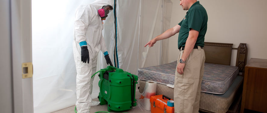 West Springfield, VA mold removal process